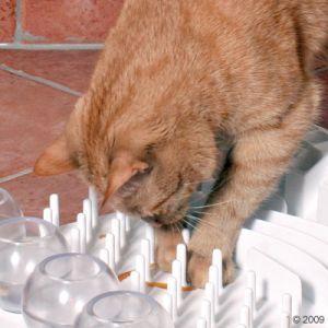 http://www.zooplus.it/-zap270890/shop/gatti/giochi_gatti/giochi_intelligenti_gatti