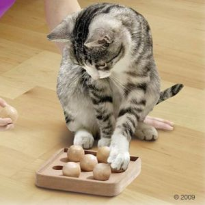 http://media.zooplus.com/bilder/katzenspielzeug/kitty/brain/train/boccia/1/300/131980_karlie_braintrain_cb_1.jpg