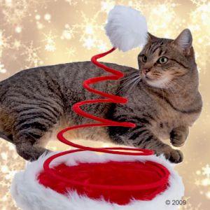 Ein Tier als Weihnachtsgeschenk - ist das wirklich das Richtige?