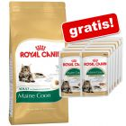 10 kg Royal Canin Breed + 12 x 85 g Breed Nassfutter gratis!
