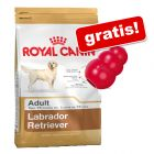 12 kg Royal Canin Breed + Kong Classic gratis!