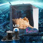 Kit complet pour aquarium H2show Atlantide Coquillage de mer