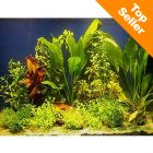 Lot de plantes pour aquariums de 100 à 120 cm