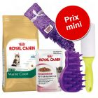 Lot Royal Canin Maine Coon pour chaton