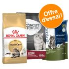 Pack Maine Coon : croquettes pour chat adulte