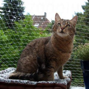 Rete recinto protettiva per gatto nylon 6 x 3 h m ebay - Rete per gatti giardino ...
