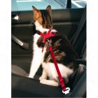 Safety Belt for Cats