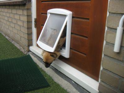 Porta basculante per cani e gatti a 2 vie marrone for Porta basculante per cani fai da te