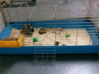 Nieuw hok kopen hamsterforum - Een hok ...