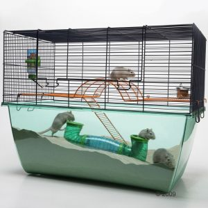 Perfect for Gerbils or hamsters!
